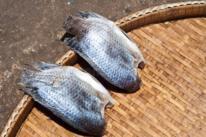 Download Salted fish stock photo. Image of dehidrated, back, freshness - 25491988