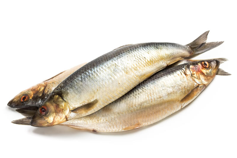 Salted herring fish royalty free stock photo