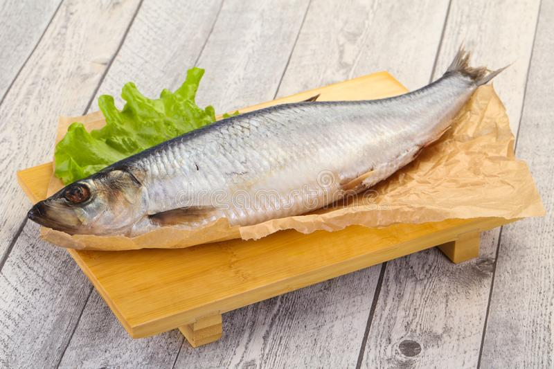 Salted herring fish. Ready for eat royalty free stock images