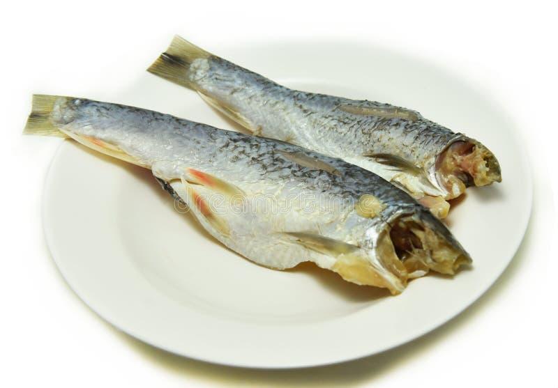 Salted herring fish. On White background stock photo