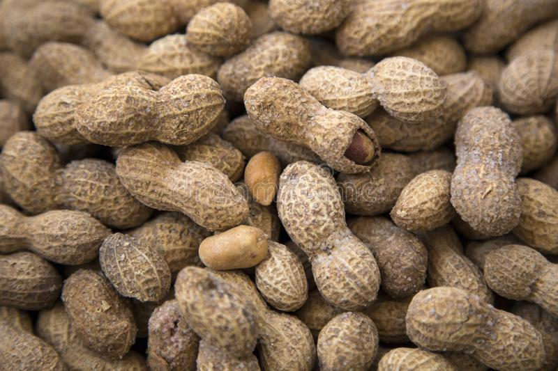 Salted peanuts or groundnut. Salted and shelled peanuts or groundnut stock photography