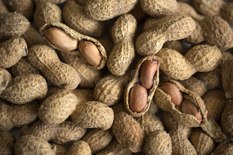 Salted peanuts or groundnut. Salted and shelled peanuts or groundnut stock image