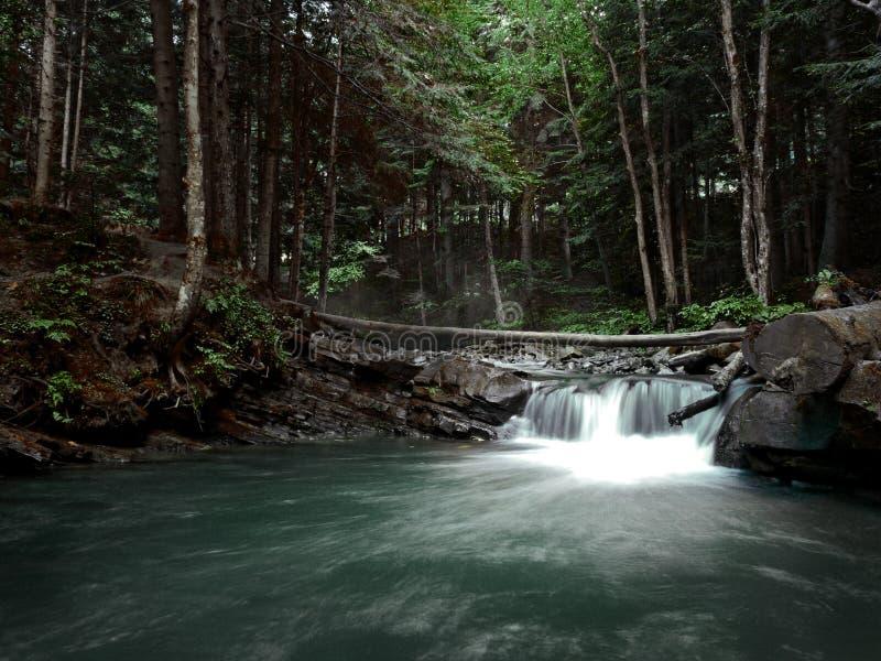 Salti in serie sopra le rocce muscose in montagne carpatiche sul fondo di legni di autunno fotografia stock