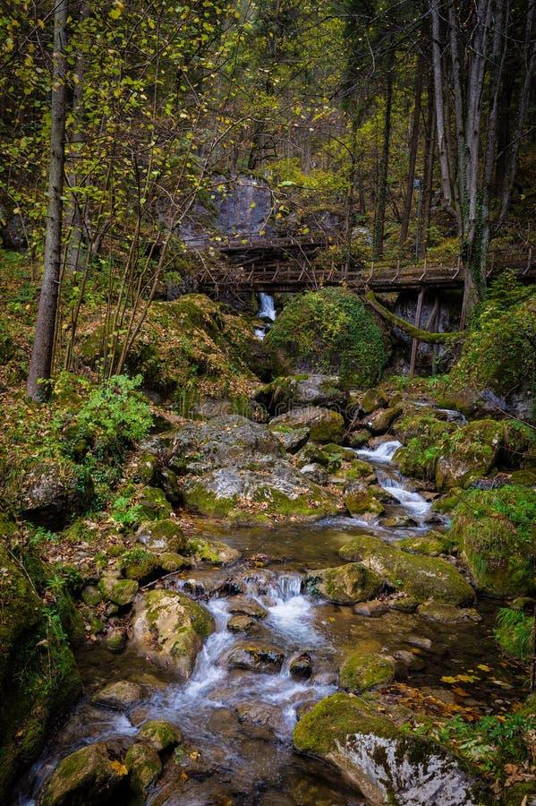 Salti in serie sopra le rocce muscose nella foresta di autunno a Myrafalle fotografia stock