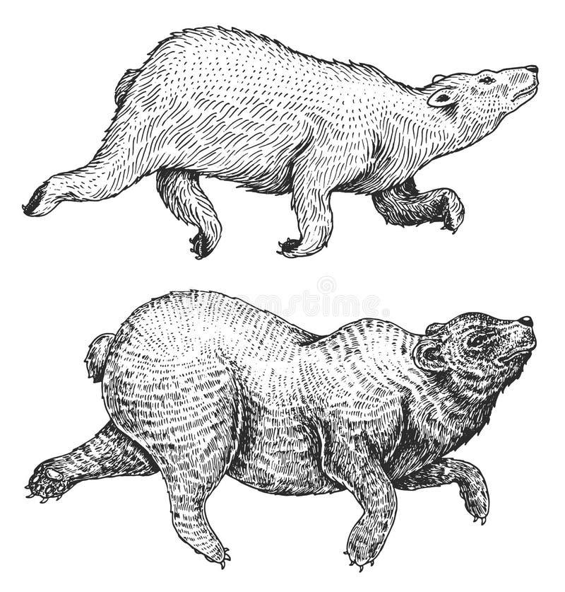 Salto animal selvagem Subir urso marrom e polar e panda gigante urso pardo monocromático Estilo do vintage mão gravada ilustração royalty free