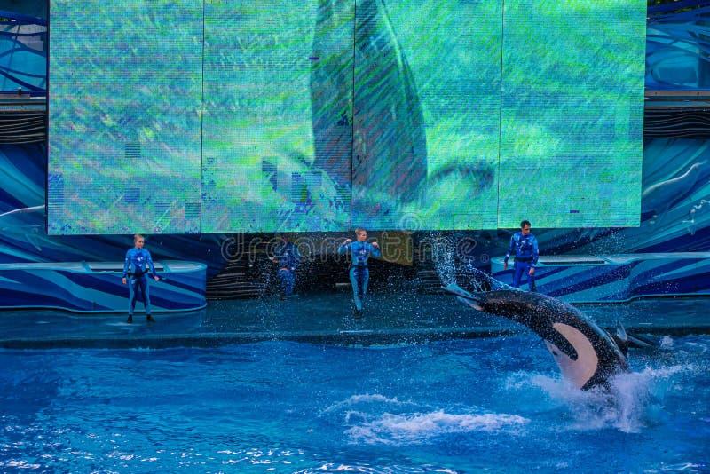 Salto de baleia no One Ocean Show no Seaworld 15 imagem de stock royalty free