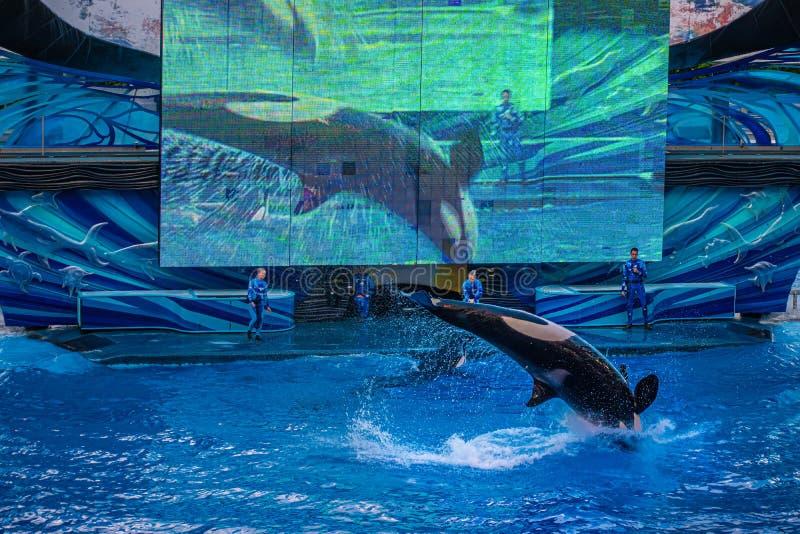 Salto de baleia no One Ocean Show no Seaworld 18 fotos de stock royalty free