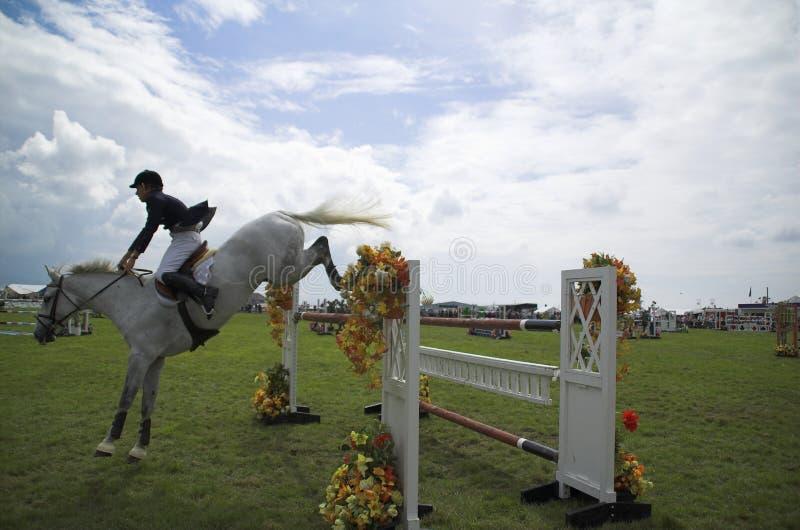 Salto de la demostración del caballo foto de archivo libre de regalías