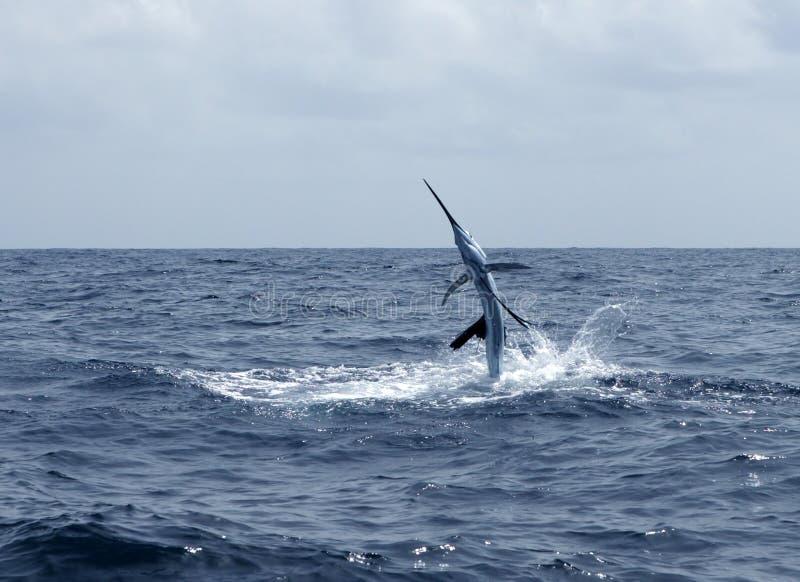 Salto de la pesca deportiva del agua salada del pez volador imagenes de archivo