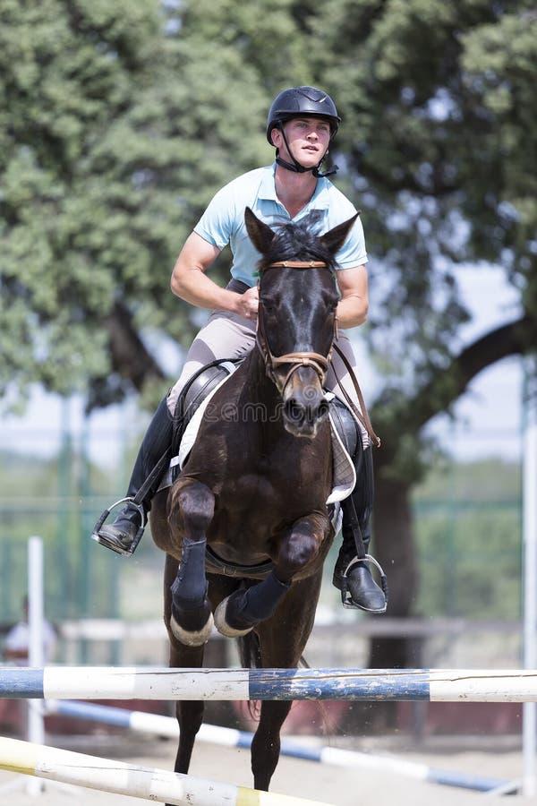 Salto del cavaliere del cavallo immagine stock libera da diritti
