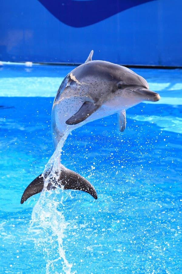 Salto del delfín imagenes de archivo