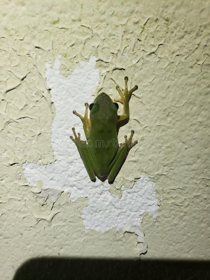 Salto del froggy de la rana foto de archivo