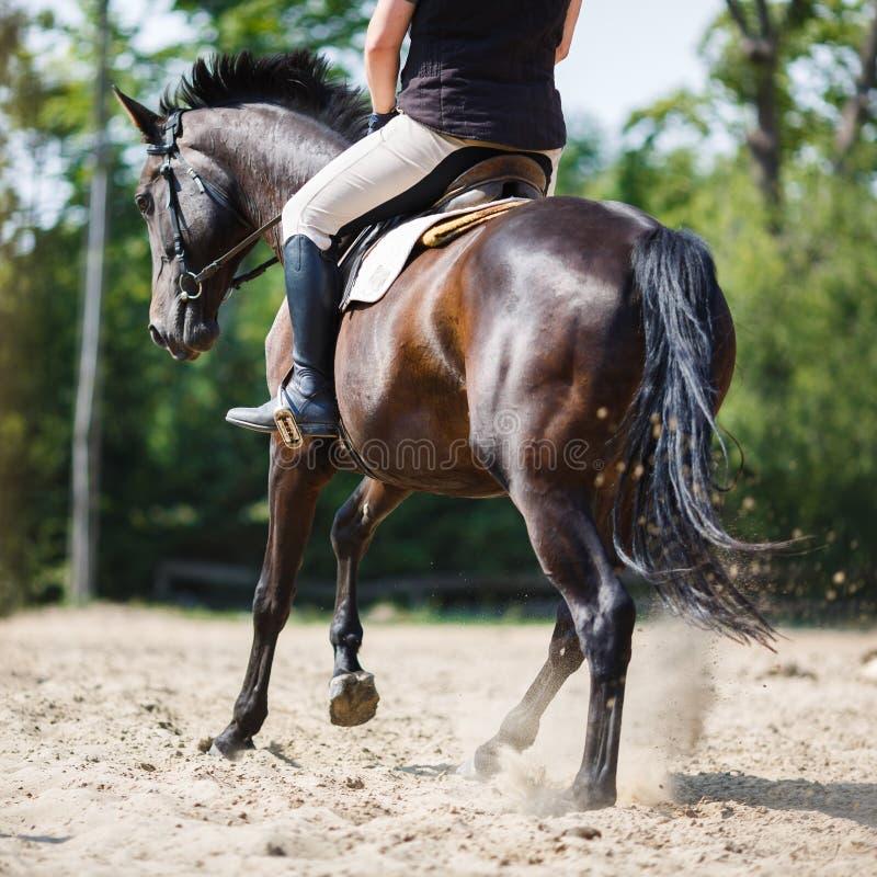 Salto del jinete del caballo fotos de archivo