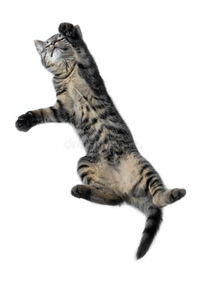 Salto divertido del gato imagen de archivo