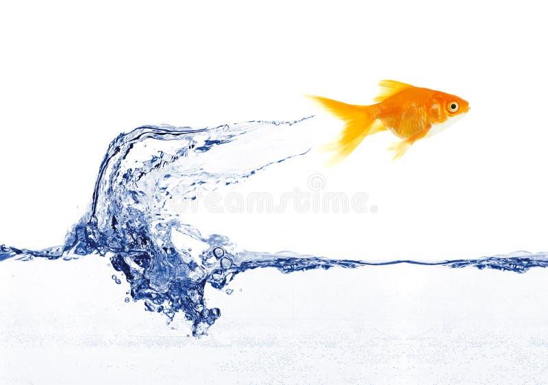 Salto dos peixes do ouro fotos de stock royalty free