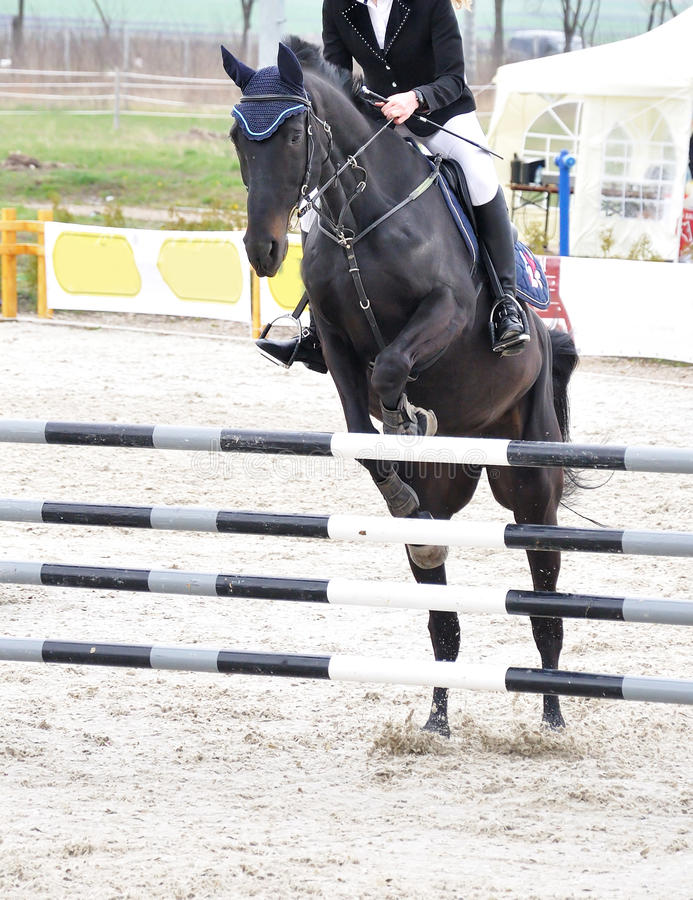 Salto equestre sul cavallo nero fotografia stock libera da diritti