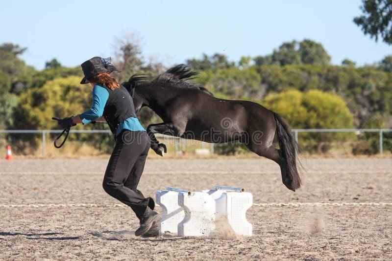 Salto miniatura del cavallo fotografie stock