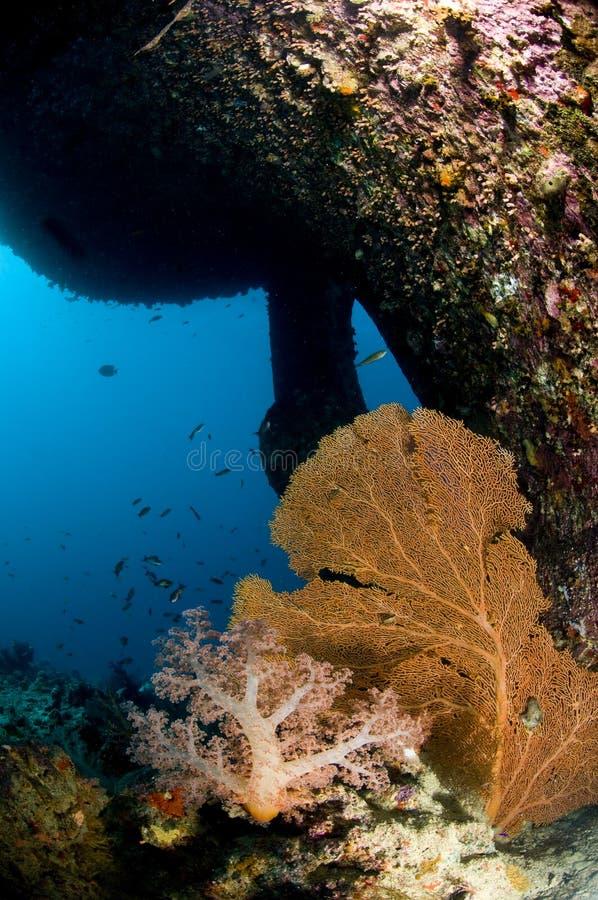 Salto, ruina en el Mar Rojo foto de archivo