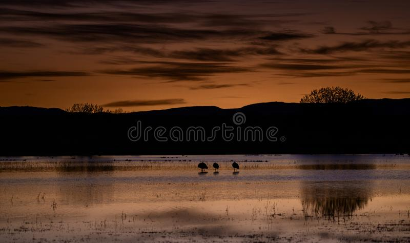 Salto sobre o lago com guindastes imagem de stock royalty free