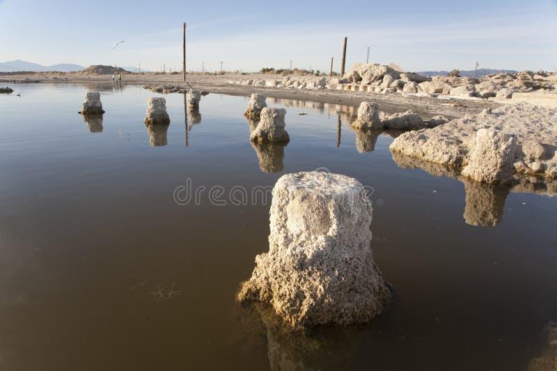 Salton Sea Coast Stock Photo