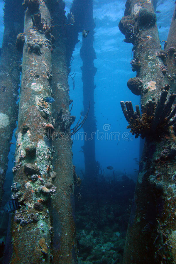 Saltpier Bonaire royalty-vrije stock foto's
