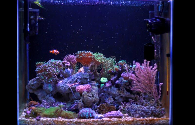 Saltvattens- akvarium, plats för behållare för korallrev hemma arkivbild
