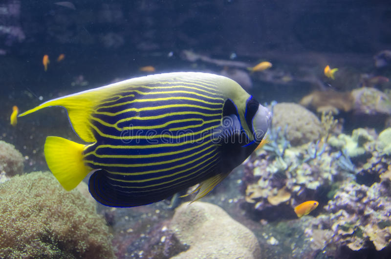 Saltwater ryba w akwarium obrazy royalty free