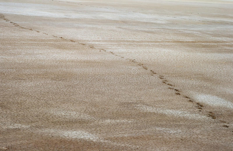 Salty land and footprints
