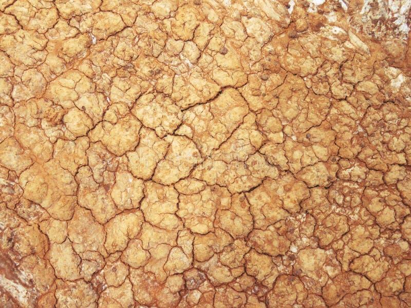 Salty soil royalty free stock photo