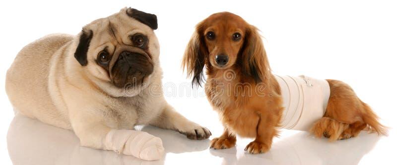Salud de los animales fotografía de archivo libre de regalías