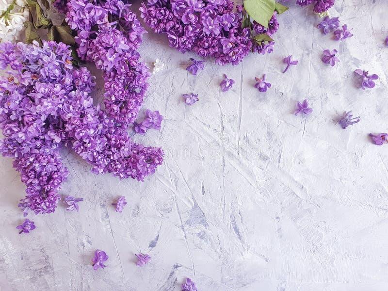 Saludo estacional del diseño del flor de la flor de la lila del marco concreto gris romántico del fondo imagen de archivo