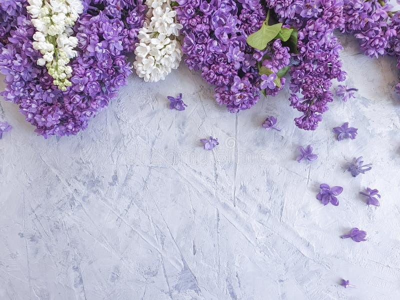 Saludo estacional del marco concreto gris del fondo de la flor de la lila fotos de archivo