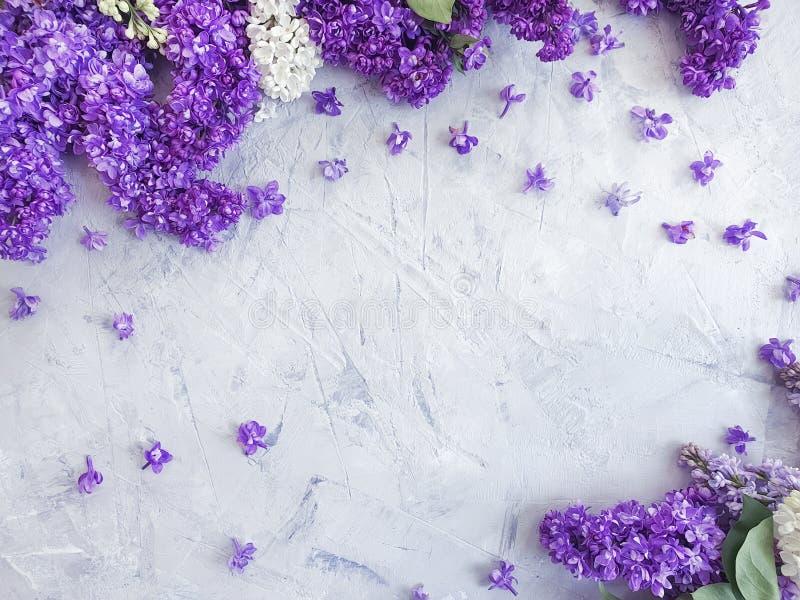 Saludo estacional del marco concreto gris del fondo del flor de la flor de la lila imagen de archivo libre de regalías