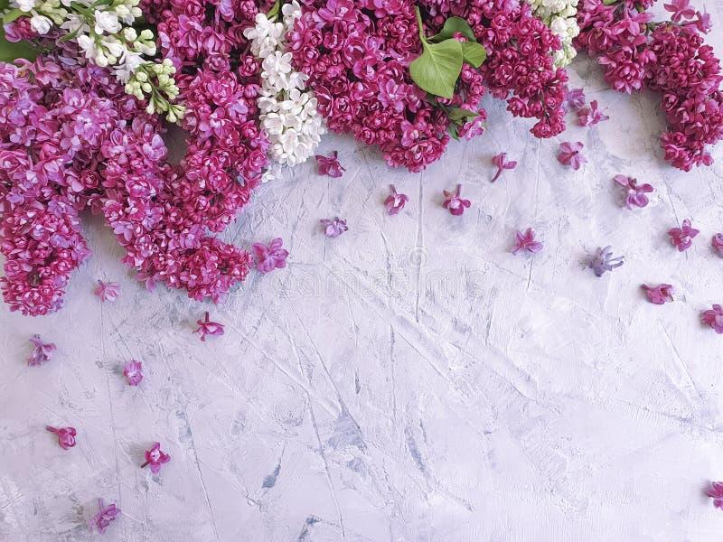 Saludo estacional del marco concreto gris romántico del fondo del flor de la flor de la lila imagen de archivo