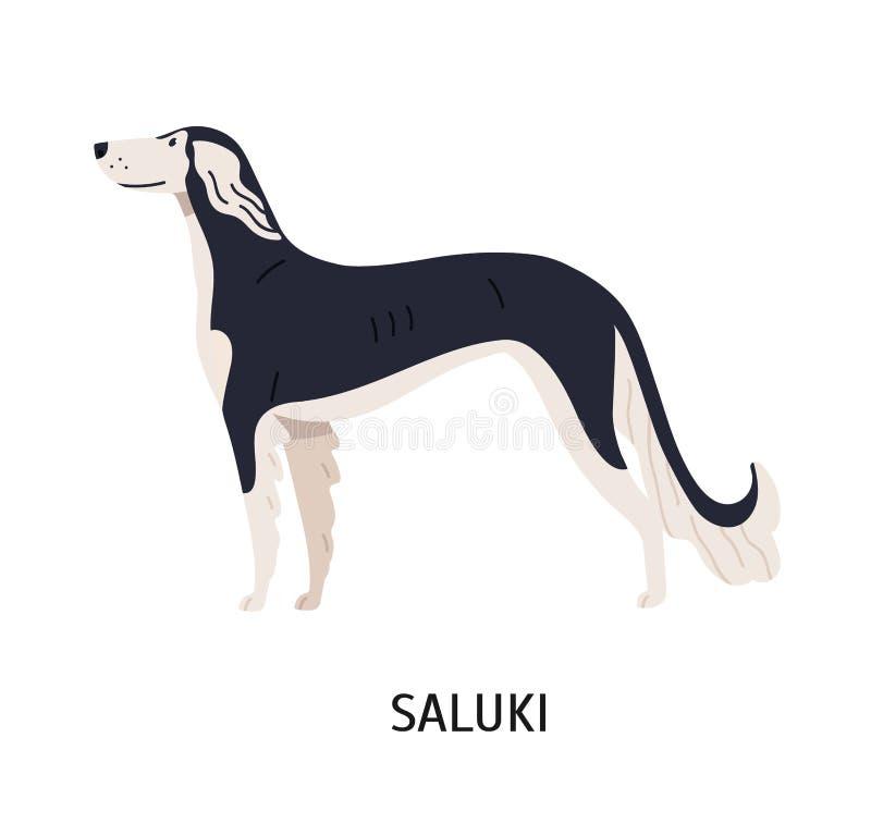 Saluki Beau chien magnifique de chasser la race, le gazehound ou le sighthound, vue de côté Animal de compagnie de race mignon de illustration stock