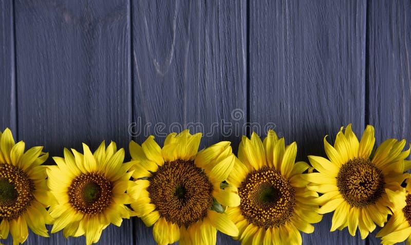 Salutation du design de carte avec des tournesols sur le fond en bois gris Vue pour le texte avec des fleurs de tournesol Tournes images stock
