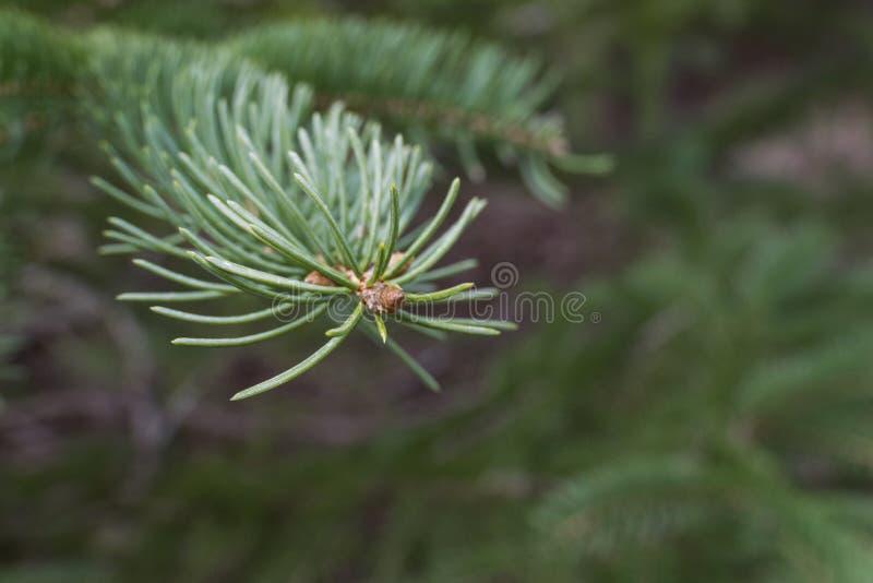 Salutation du ` s d'hiver sur de jeunes arbres photo stock