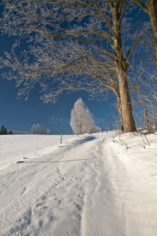 Saluti di inverno da paesaggio nevoso fotografie stock libere da diritti
