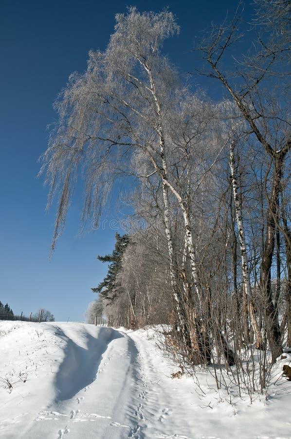 Saluti di inverno da paesaggio nevoso fotografia stock