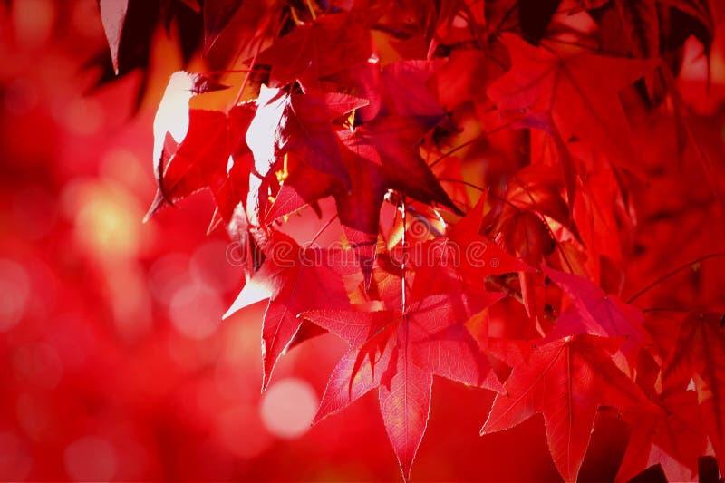 Saluti di stagione fotografia stock