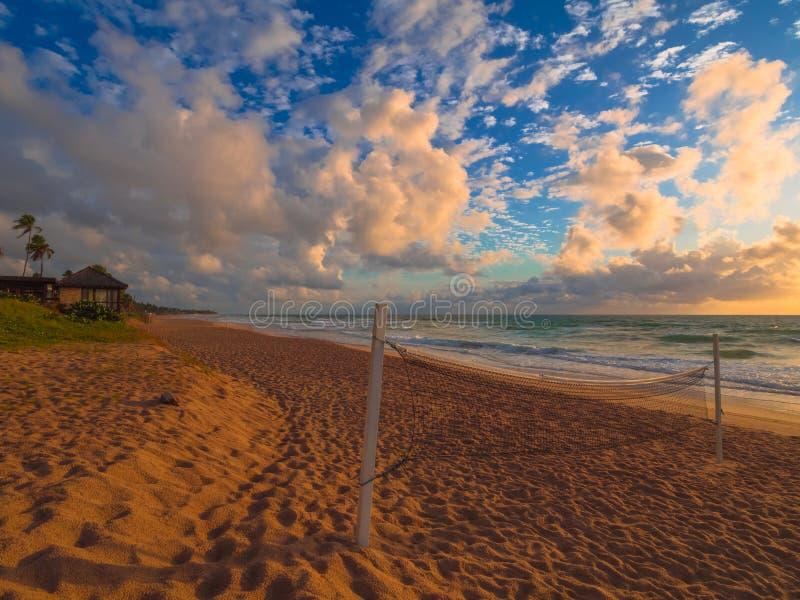 salva för sport för strandtecknad filmcharactetrs rolig royaltyfria bilder