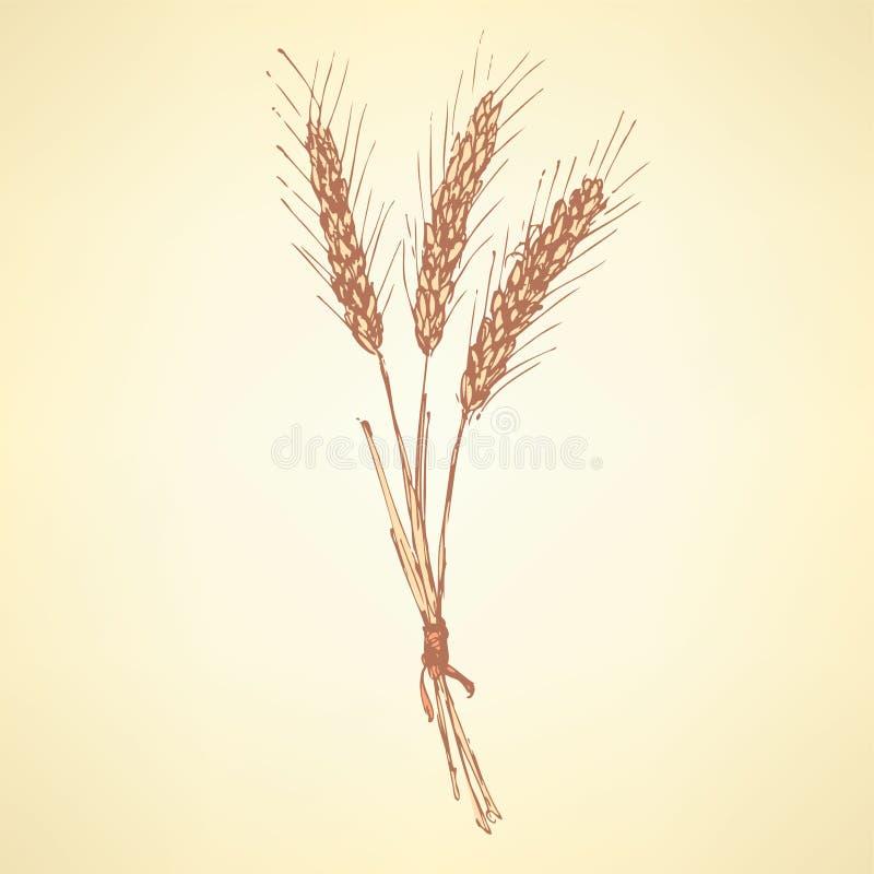 Salvado de trigo del bosquejo en estilo del vintage ilustración del vector