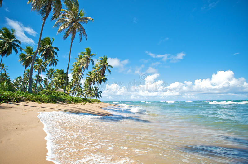 Salvador de Bahia, Brazil. Paradise beach in Praia do Forte, Salvador de Bahia state, Brazil stock photography