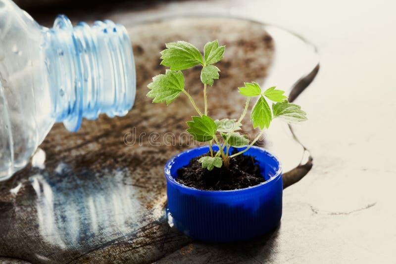 Salvar a fotografia do conceito de projeto do eco da água O gargalo e o verde brotam o crescimento no tampão de garrafa teste pad fotografia de stock