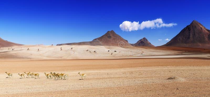 Salvator Dali öken Bolivia royaltyfria bilder
