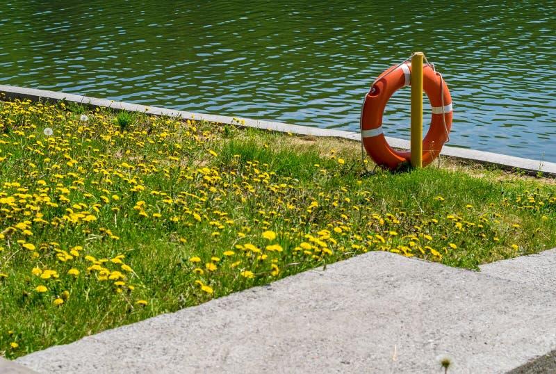 Salvavidas en el fondo de una trayectoria concreta cerca de la charca con la hierba verde y las flores amarillas fotografía de archivo libre de regalías