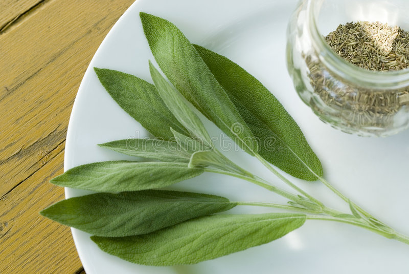 Salvia 1 stock afbeelding