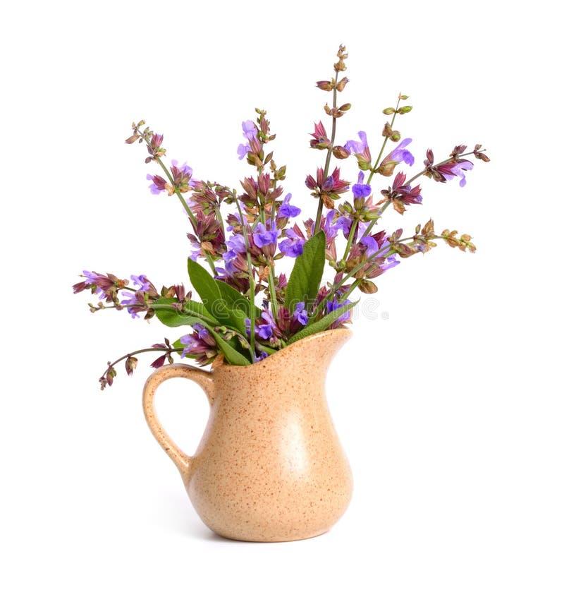 Salvia-officinalis Blume lizenzfreies stockfoto