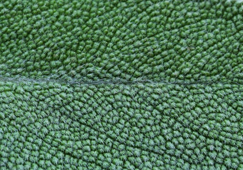 Salvia piccante aromatica dell'erba fotografia stock libera da diritti
