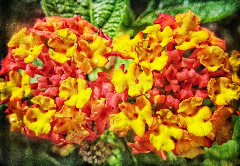 Salvia rossa fotografia stock libera da diritti